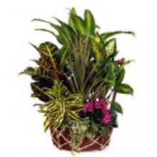 cesta-plantas-premiun